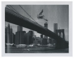 Flying seagull over Brooklyn Bridge, New York City.