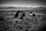 Wild Mustang horses outside of Alvord Desert in Oregon.