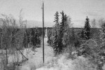 Electric pole in a winter forest taken on a train from Anchorage to Talkeetna, Alaska.